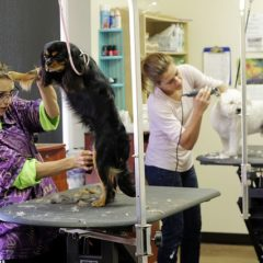 Dog Grooming Secrets